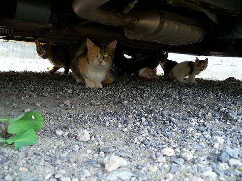 通りすがりに見かけた猫637-641