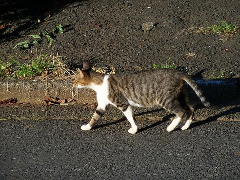 通りすがりに見かけた猫647