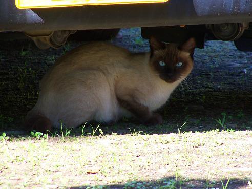 通りすがりに見かけた猫652
