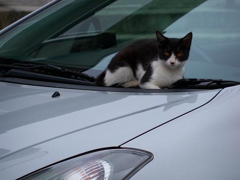 通りすがりに見かけた猫651