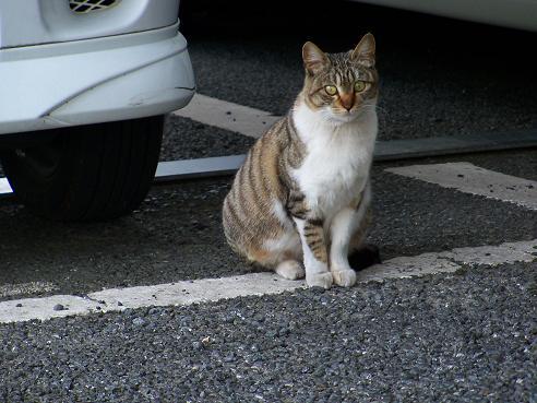 通りすがりに見かけた猫663