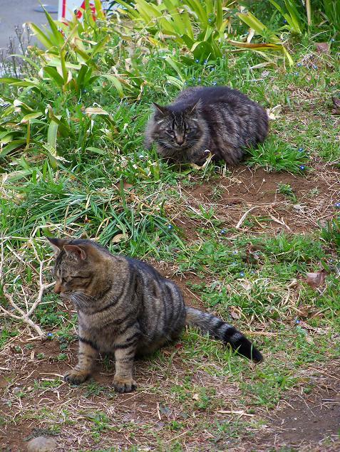 通りすがりに見かけた猫664・665