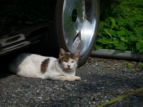 通りすがりに見かけた猫671