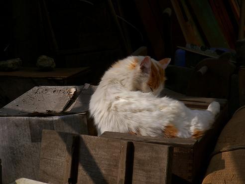 通りすがりに見かけた猫673