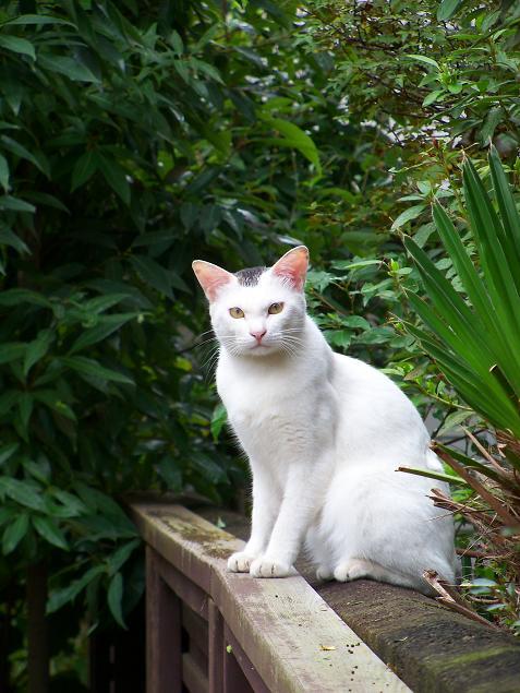 通りすがりに見かけた猫680