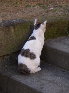 猫 日ノ出町