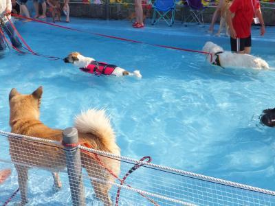 プール開きだよ!