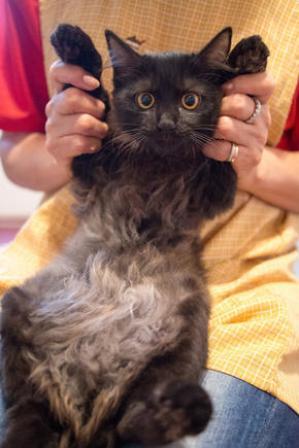 cat296-7.jpg