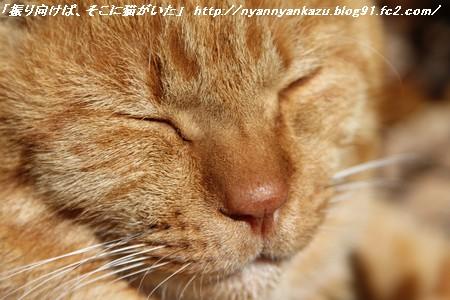 IMG_0052_blog.jpg