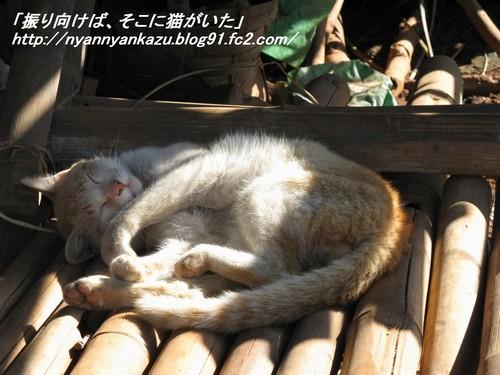 IMG_0710_blog.jpg