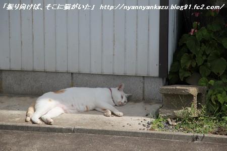 IMG_5818_blog.jpg