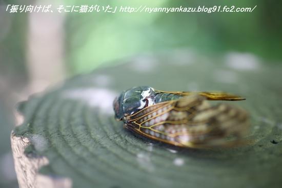 IMG_8516_blog.jpg