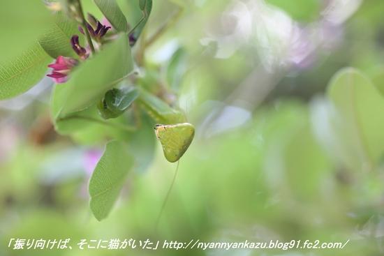 IMG_8520_blog.jpg