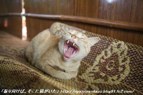 IMG_9233_blog.jpg