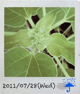 11-07-28.jpg