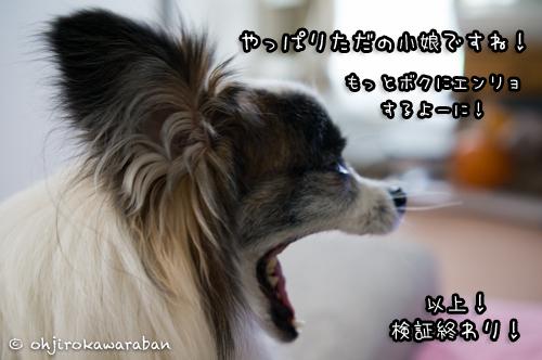 *6-DSC04357