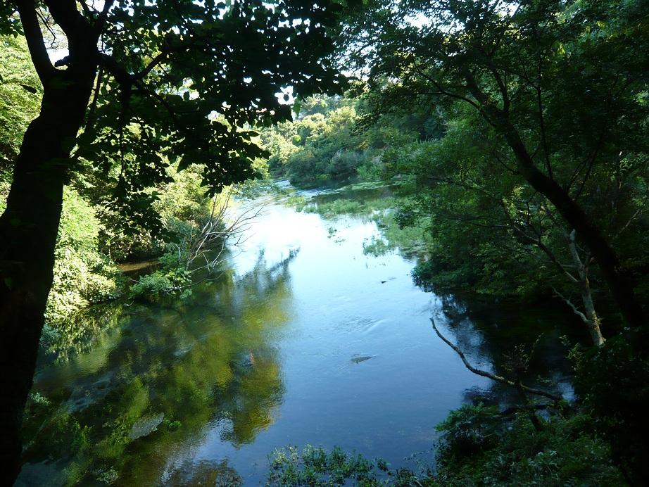 湧き水できれいな川だ