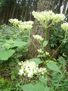 なんちゅう花なのか、高尾の秋の花