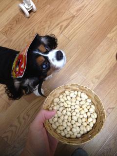 豆とロディ