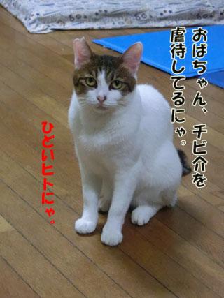 CIMG2838_20130325225408.jpg