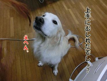 CIMG4662.jpg