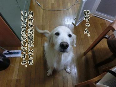 CIMG4699.jpg