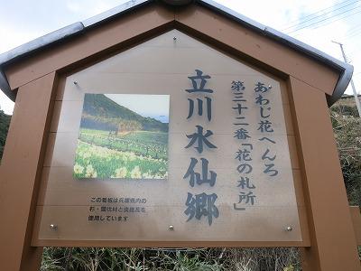 立川水仙郷 (6)