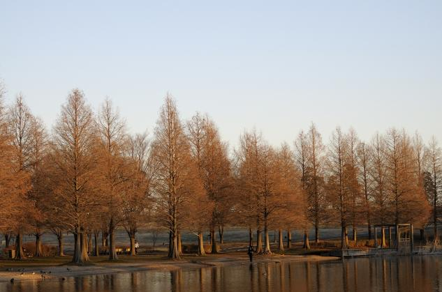 舎人公園の夜明け