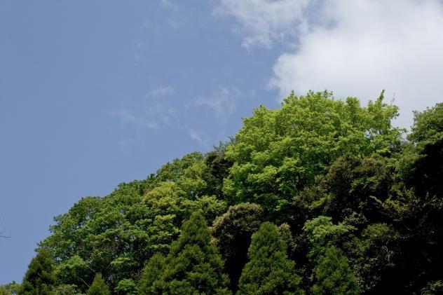 梅ケ瀬渓谷