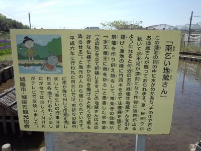 城陽花しょうぶ (1)