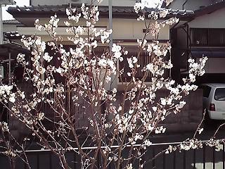 11-03-13_001.jpg