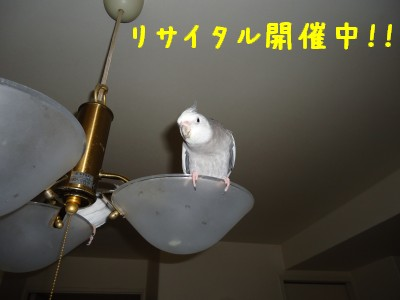 動画 395