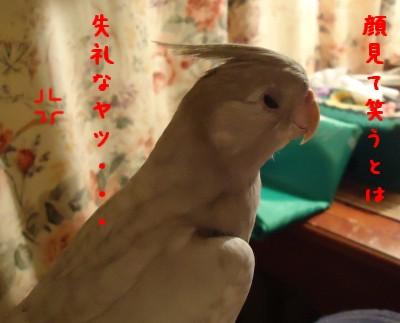 動画 081
