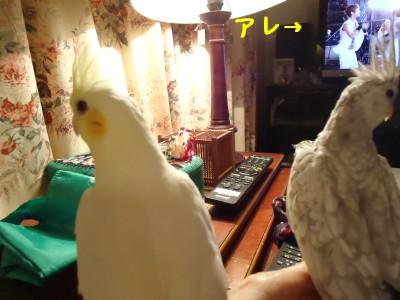 動画 076