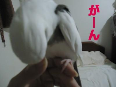 動画 411