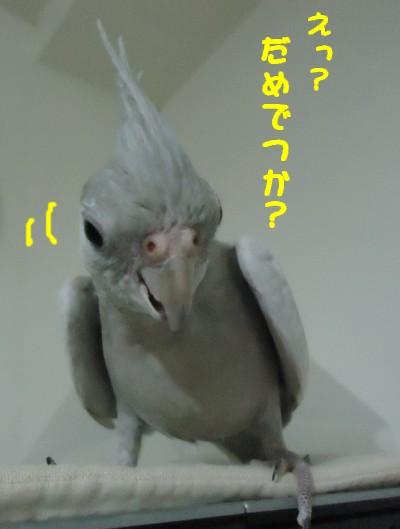動画 464