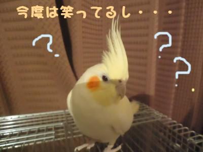 動画 020