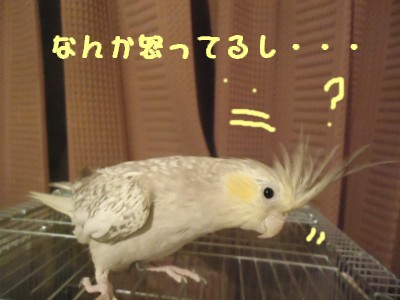 動画 022