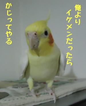 動画 328