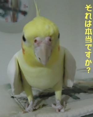動画 325