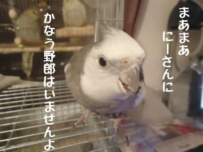 動画 130