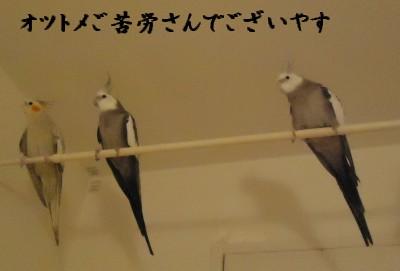 動画 437
