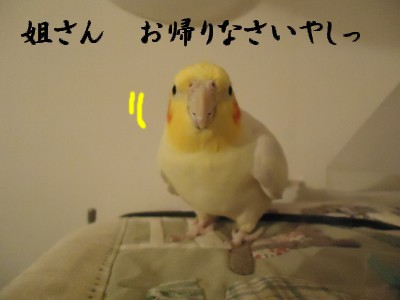 動画 435