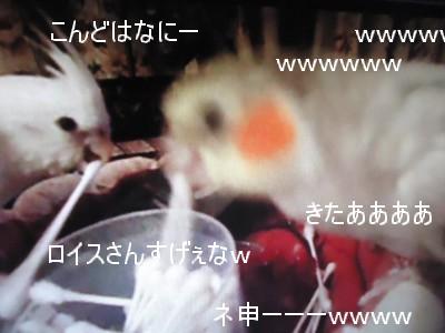 動画 037