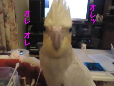 動画 472