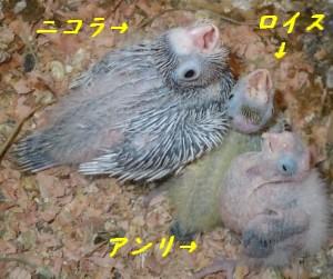 Oka_0110_2.jpg