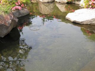男川浄水場 河川水監視用の池