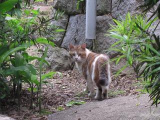 蓑川町のネコ