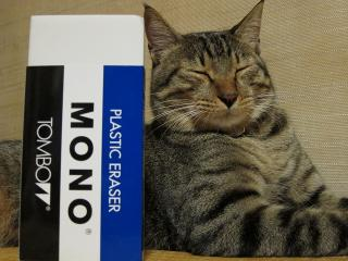 消しゴムとネコ