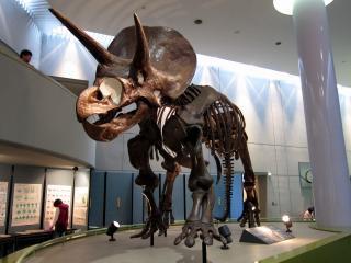 豊橋市自然史博物館
